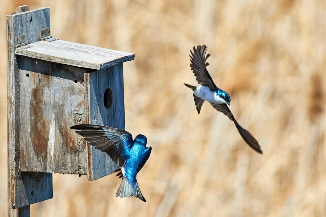 fabriquer un nichoir a oiseaux