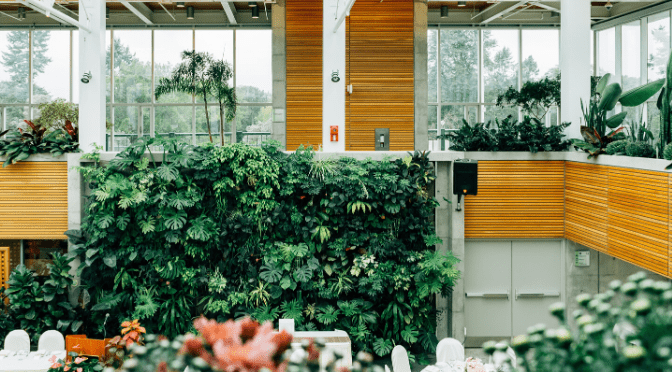Where are the best places to buy house plants?