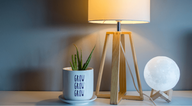 lamp and aloe plant