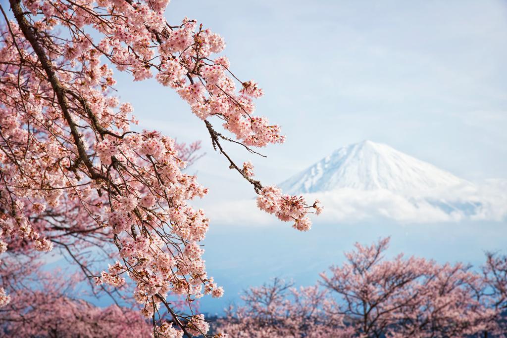 internetska stranica za cvjetanje trešnje
