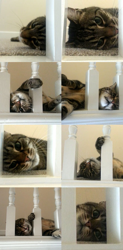 tabby cat montage