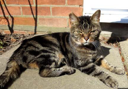 Tabby cat in the garden