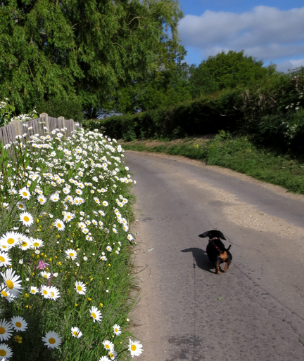 Daisy and dog