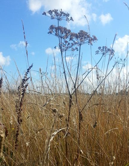 seedheads - New Term