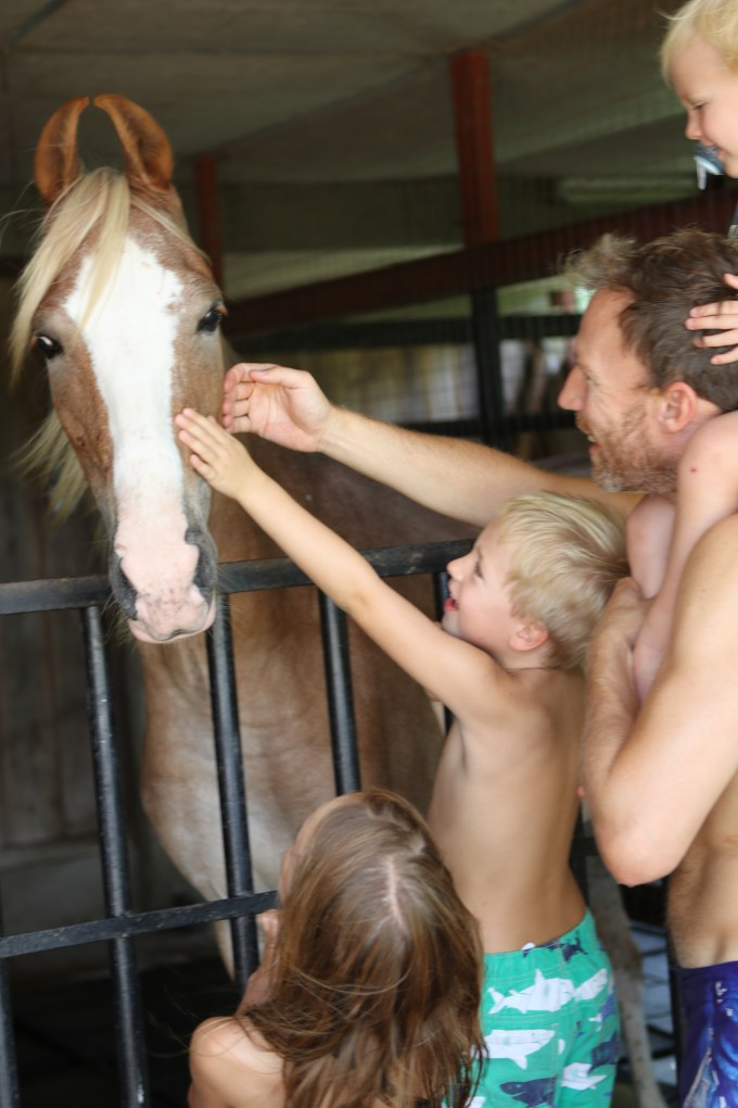 4strokehorse