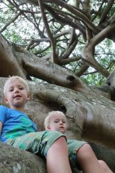 Boys in Crazy Tree