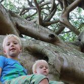 Boys in Crazy Tree