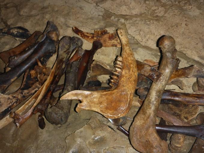 Bones in Waitomo