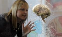 Wow, a Brain!