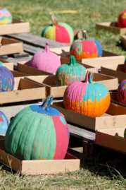 Painted pumpkins at Terhune Orchards.
