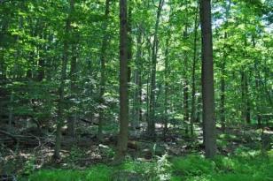 webCarter Road woods