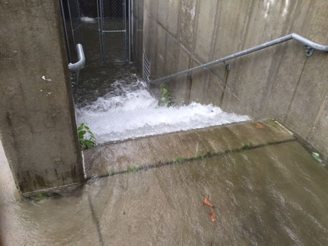 Water rushes down the steps at the performing arts center at Princeton High on Saturday afternoon. Photo: Steve Hiltner.