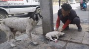 Anguished mother dog wails for wounded baby. Sweetest reunion!