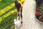 Not Today: Woman Tried To Steal This Dog, But He Wasn't Having It!