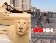 This Man Got Pet Lions Just Chillin' In His Crib… Dares Someone To Break In!