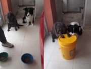 No Way: Dominican Father Has His Doggies Trained… Praying Before Eating!