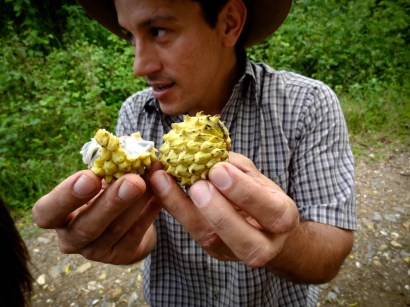 Travel Photo: Honduras - Carlos Handling Anona Fruit From Finca El Cisne