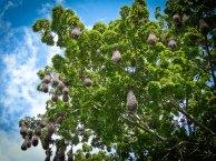 Photo Travel: Nicaragua - Kayak Tours in Granada