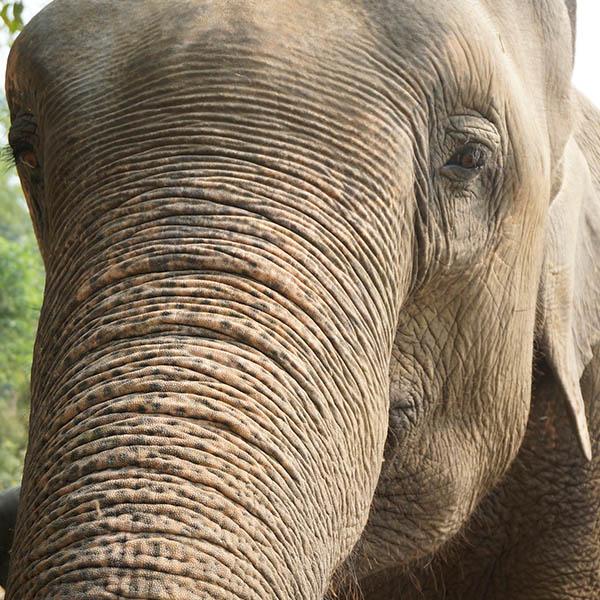 _DSC8095 elefant QUAD