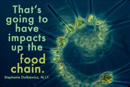 food_chain