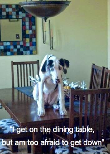 Dog can't get off dining table.
