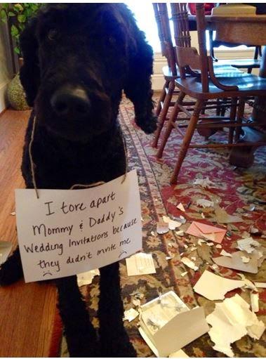 Dog tore up wedding invitations.