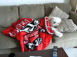 Benny in a Badger blanket.