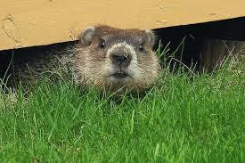 Groundhog Business