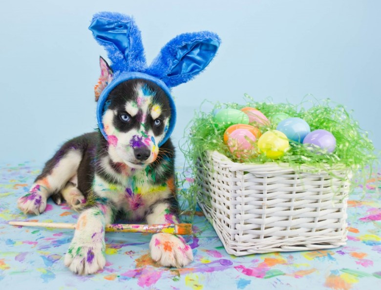 dog easter eggs bunny paint