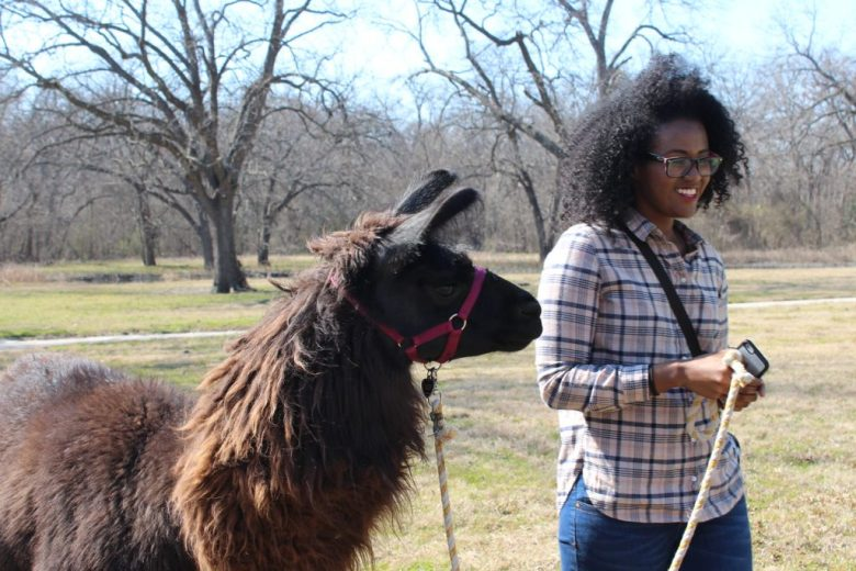 Llama walk with Shangrillama at Bob Woodruff Park, Plano.