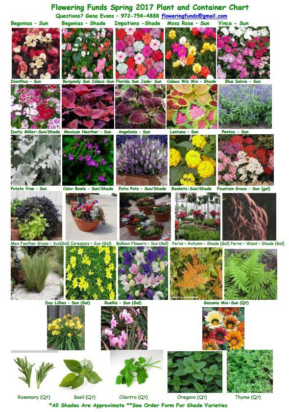 plant-chart-spring-flower-sales