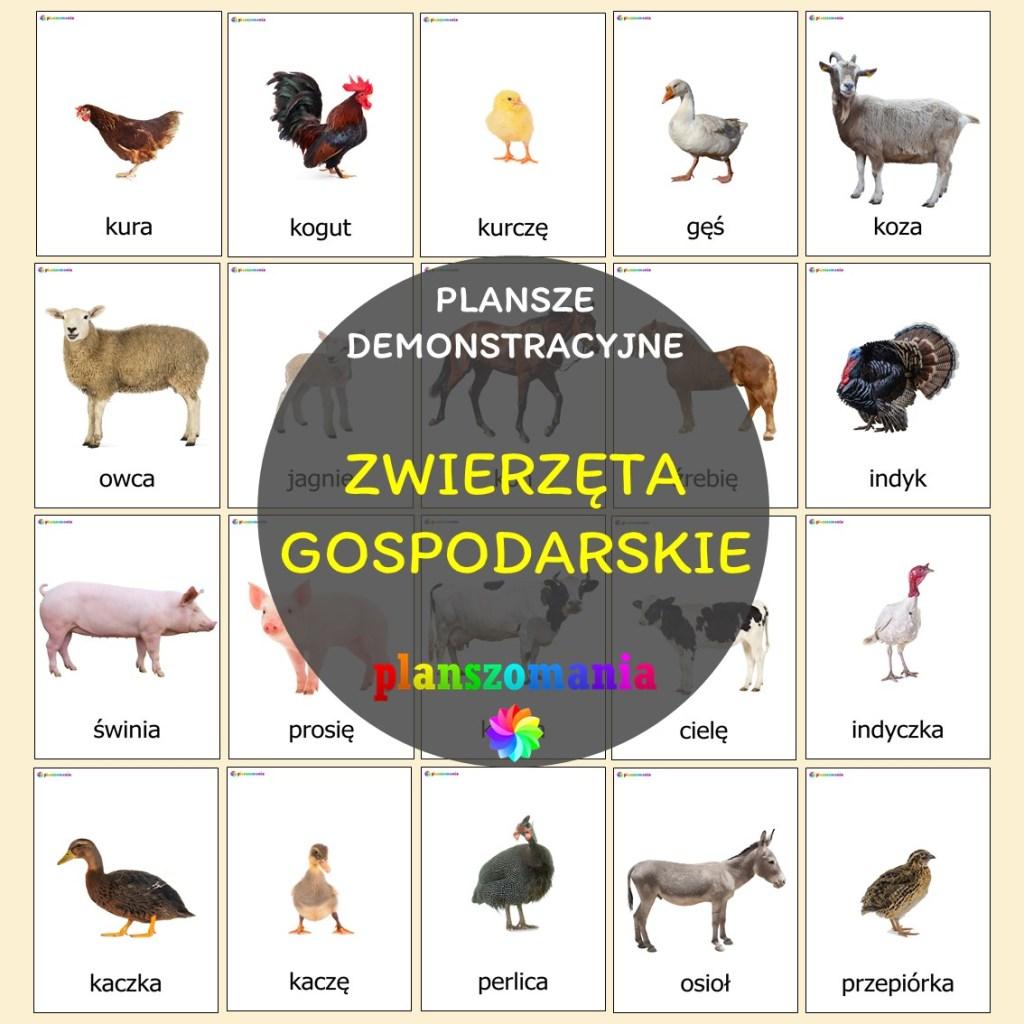 zwierzęta gospodarskie hodowlane do drukupomoce edukacyjne terapeutyczne pdf