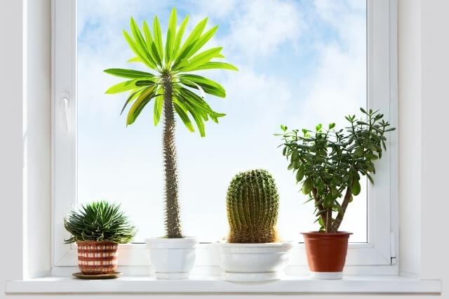 Planten Vensterbank Plantada Blog