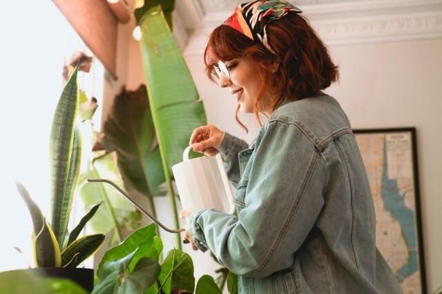 Waterbehoefte Kamerplanten