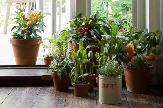 Basisbehoefte kamerplanten