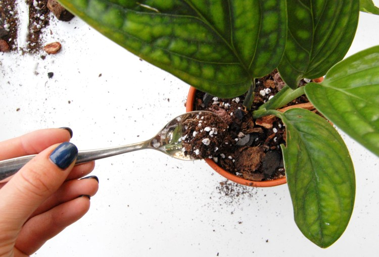 DIY chunky soil mix being used for aroids (Monstera Peru)