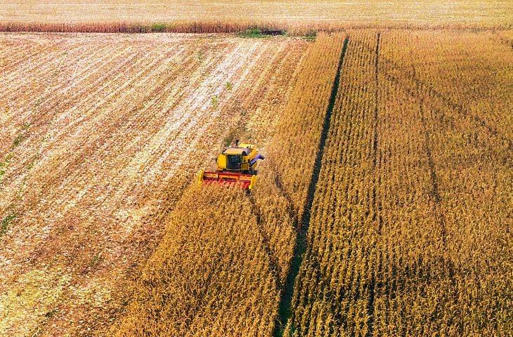 Mais de 60% da área cultivada com soja em MS já foi colhida
