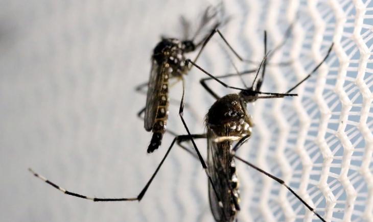 Saúde confirma mais 2 mortes por dengue em MS