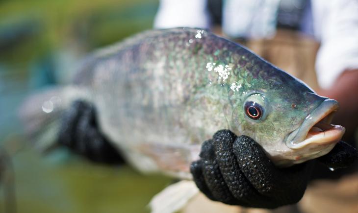 Baixas temperaturas do inverno prejudicam o metabolismo e a reprodução de peixes