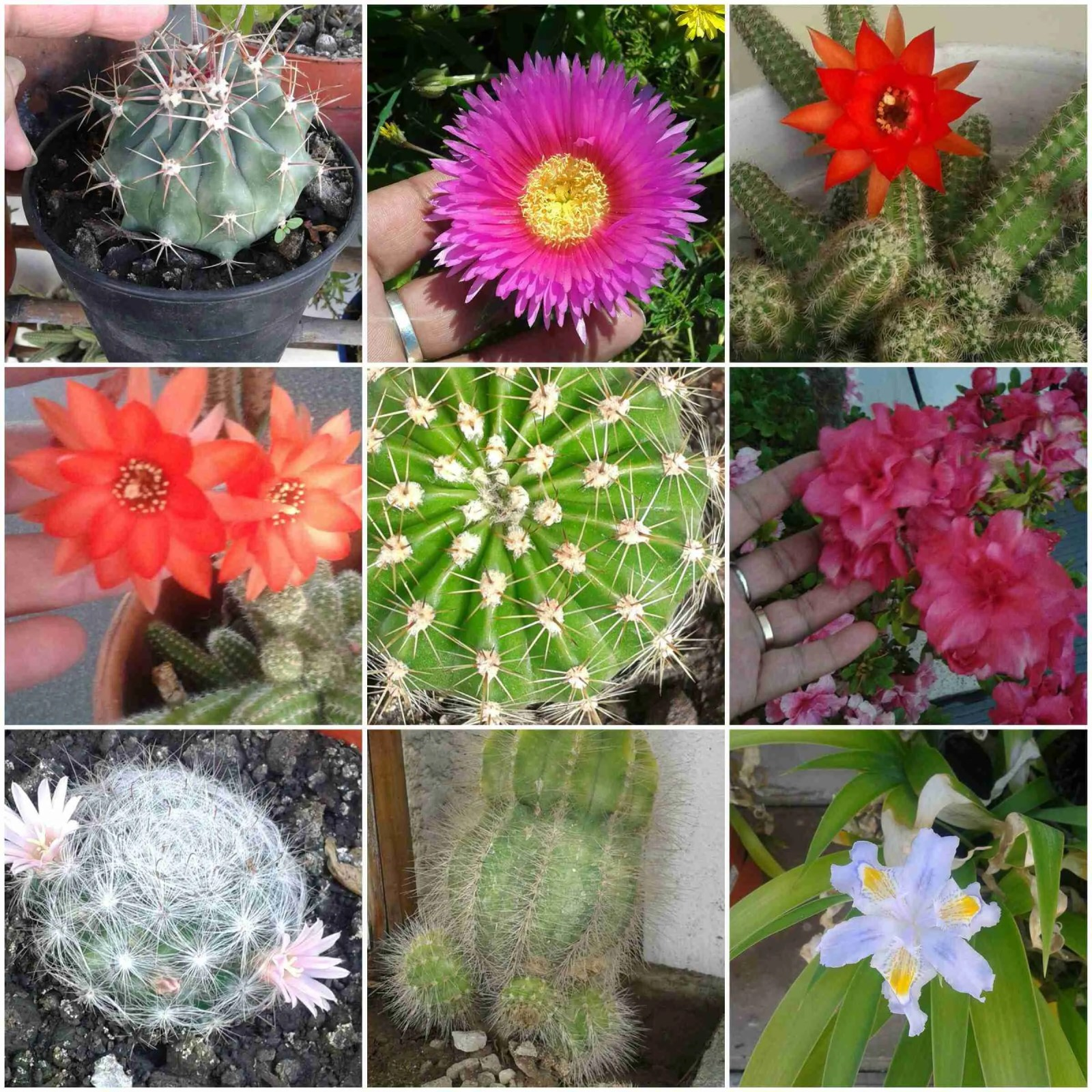 Las plantas de Yoli - Mis Plantas Tus Plantas 1