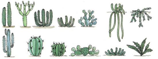 formas de cactus