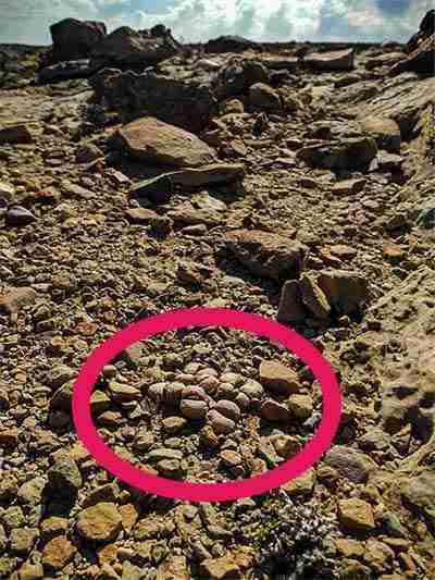 5 Secretos de los Cactus Piedras Vivas Lithops 3