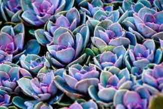 El color de las suculentas ¿Como lograr esos tonos? 7
