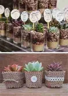 cactus y suculentas souvenirs
