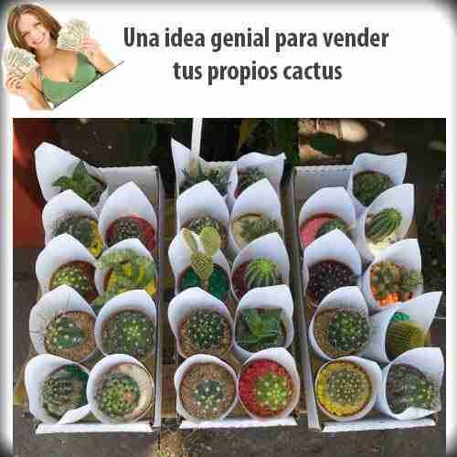 Ganate unos $$$ extras -Vendiendo los hijuelos de tus cactus! 5
