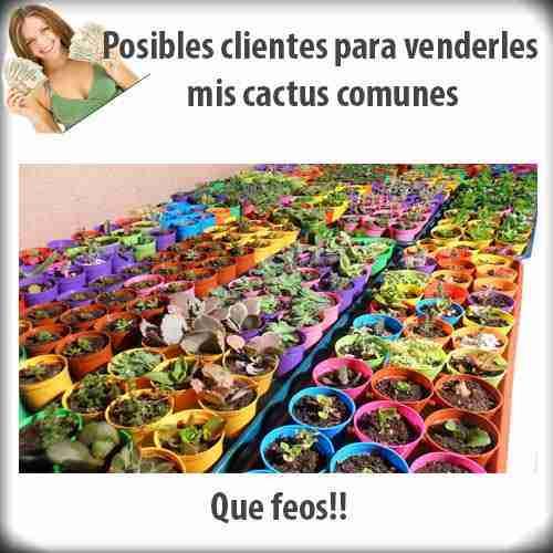 Posibles clientes para venderles mis cactus comunes 1