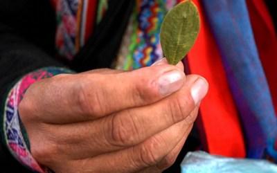 """Pobladoras de """"tierras profundas"""": Coca y mujeres en la implementación de los acuerdos de paz en la Amazonia colombiana"""