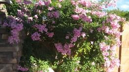 Plantas ornamentais para jardim externo, plantas de baixa manutenção e que gostam de ficar ao sol