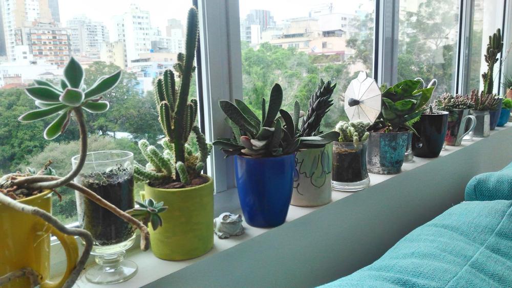 Como cultivar suculentas