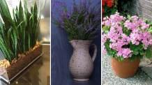 Plantas que purificam o ar, deseja começar o ano 2020 com boas energias e respirando melhor dentro de sua casa?
